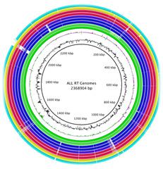 Rtoxicus genomes
